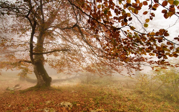 forest_fog_autumn_tree-t3